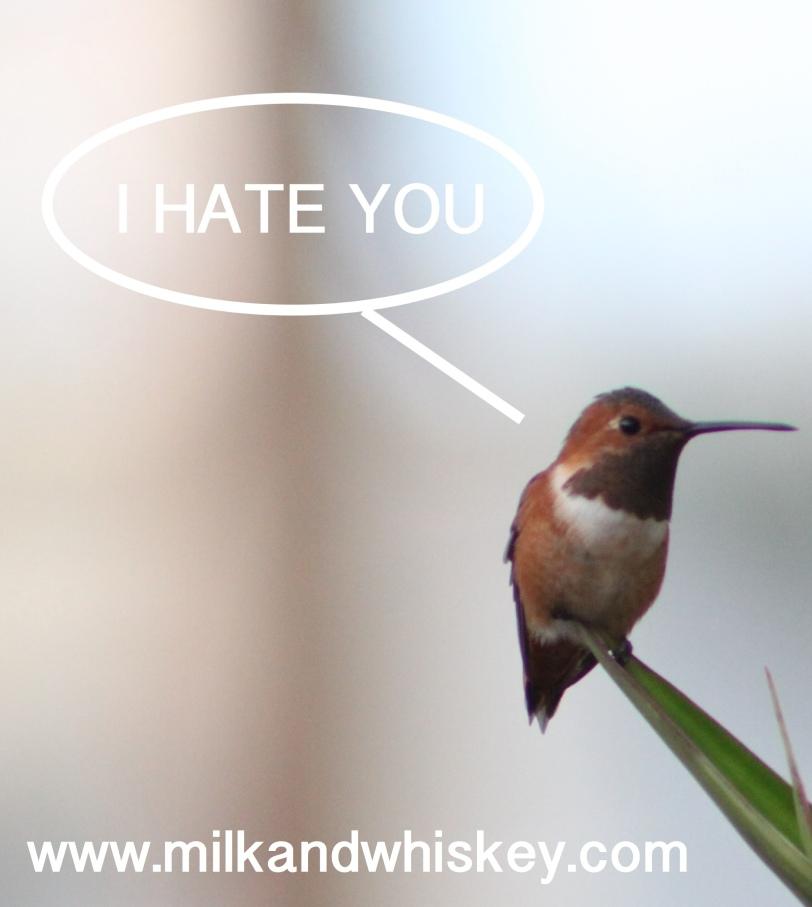 Birds hate me.