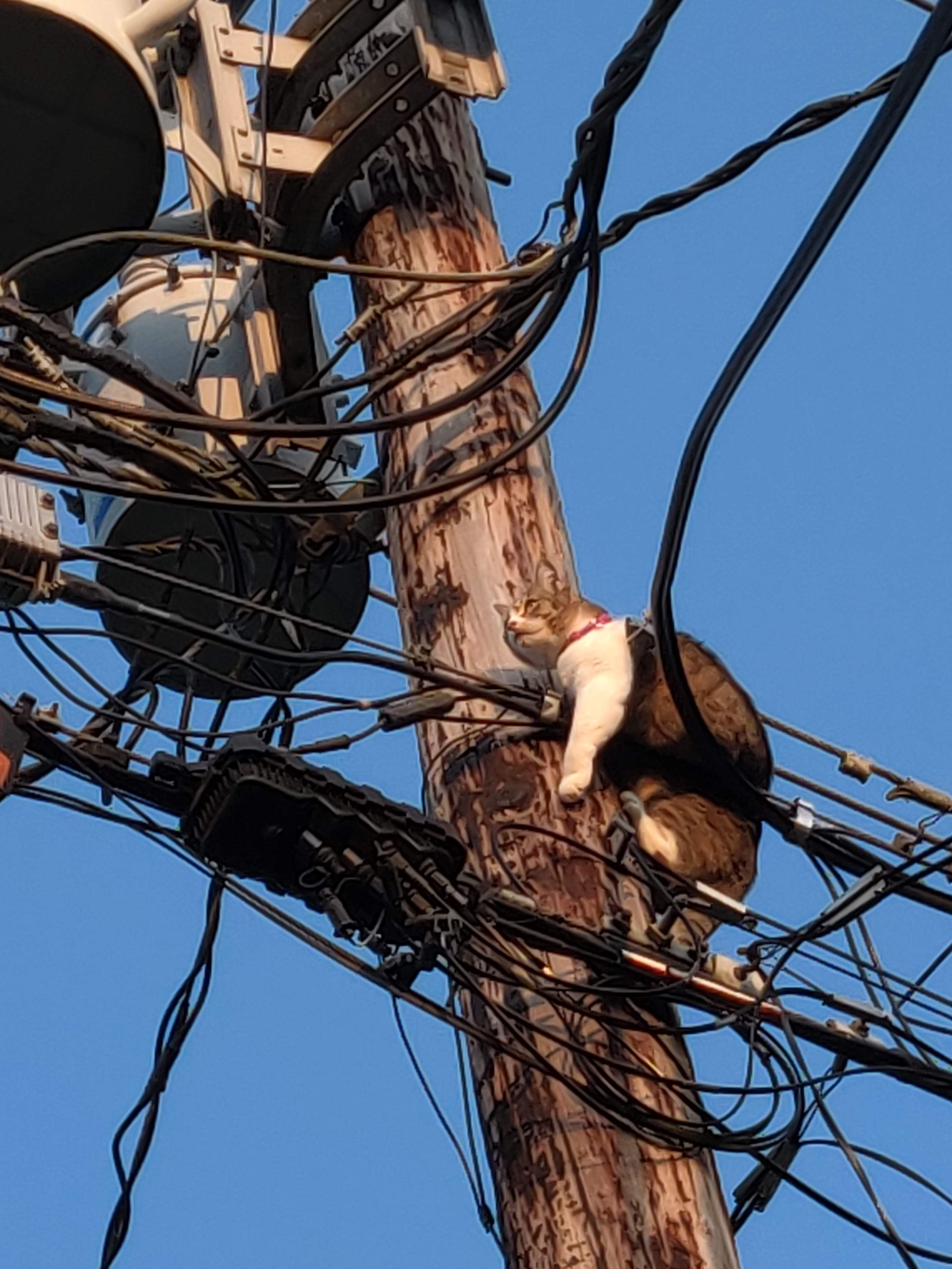 cat stuck on utility wire